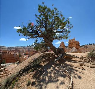 Bryce-Peekaboo Loop Trail  Utah