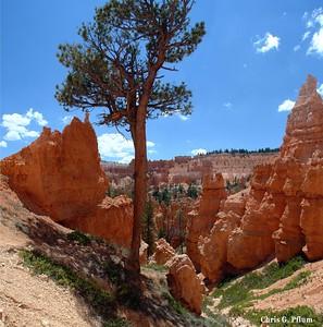Bryce - Queen's Garden Trail  Utah