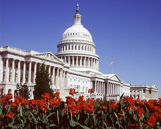 The Capitol, Washington, DC (I took this photo before the security frenzy; now fences and razor wire block this view)