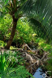 Resort Grounds, Coco Palms Resort, Kapa'a, Hawai'i, June 2014.