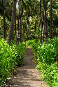 Coconut Grove, Coco Palms Resort, Kapa'a, Hawai'i, June 2014.