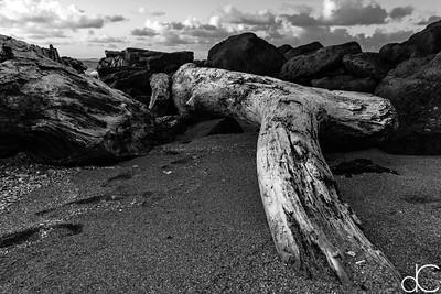Driftwood, Kapa'a, Kaua'i, June 2014.