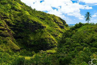Near Opaeka'a Falls, Wailua River State Park, Kaua'i, June 2014.