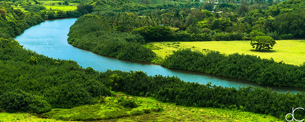 The Green Banks of the Wailua River, Kaua'i, June 2014.