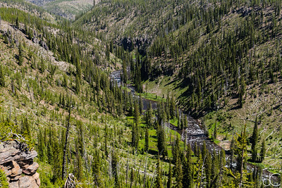 The Lewis River, Yellowstone National Park, June 2015.