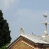 A seagull perches atop a cross on the Chiesa di San Michele.