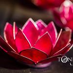 Toni Jade-163