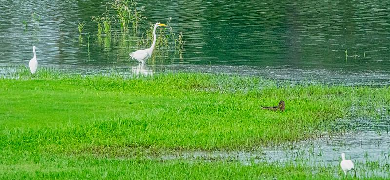 On Santiago Lake