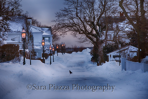 Edgartown News, Sara Piazza Photography, Edgartown Photographer, Martha's Vineyard Photographer, Martha's Vineyard Family and Wedding Photographer, blizzard 2015