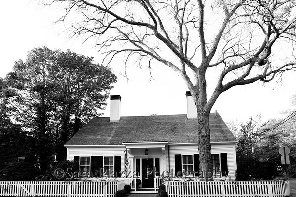 John and Pat Hayes, Edgartown elm tree