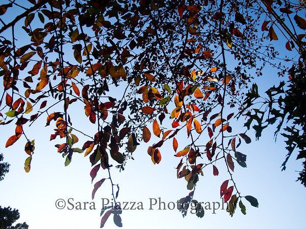 Edgartown News, Living Color