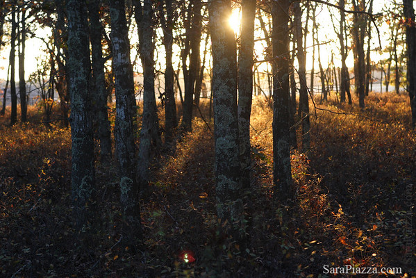 Vineyard woods, late afternoon light.