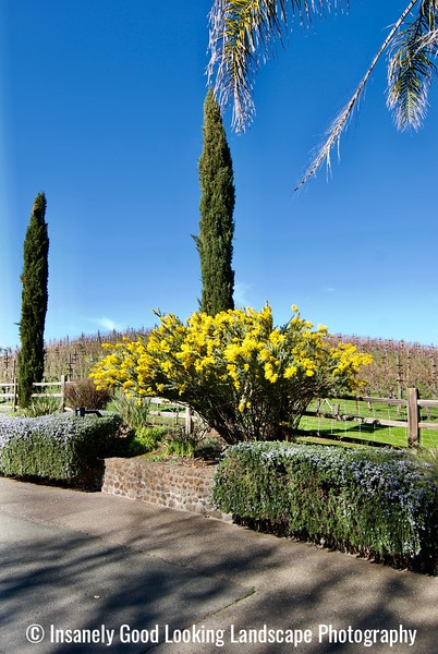 Benziger Family Winery - Glen Ellen, CA 2020
