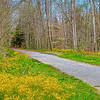 Trail in Bloom