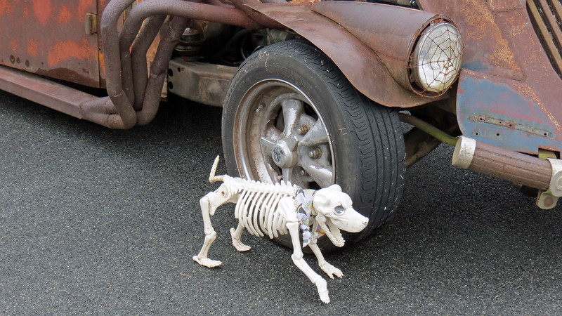 Rat rod was being guarded by an even more interesting looking guard dog.