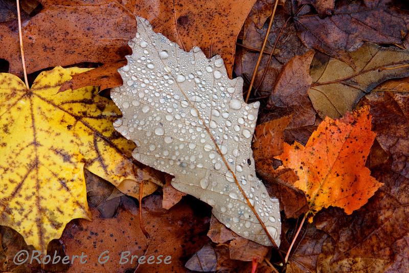©Robert G Breese