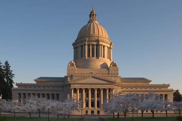 Washington State Capitol - Cherry Blossom Time