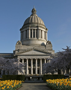 Capitol with Spring Daffodils and Cherry Blossoms