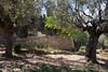 Israel_817