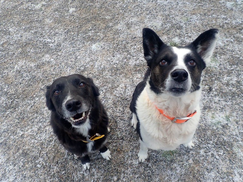 Dogs at Mystic Mountain Retreat