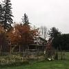 Still plenty of fall color.