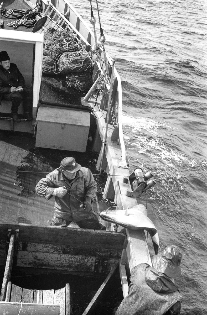 IMAGE: https://photos.smugmug.com/The-West-mostly-1971-75/Halibut-boats/i-Bd7382f/0/05433ddf/X3/RE21%20Republic%201973-X3.jpg