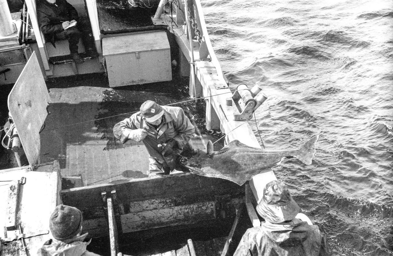 IMAGE: https://photos.smugmug.com/The-West-mostly-1971-75/Halibut-boats/i-Q8n3dC8/0/fde4681b/X2/RE20%20Republic%201973-X2.jpg