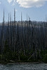 Standing Burned Forest - from Howe Ridge Fire 2003