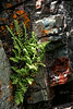 Ferns & Lichen