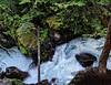 Avalanche Creek Cascades