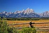 Teton View from Old Homestead