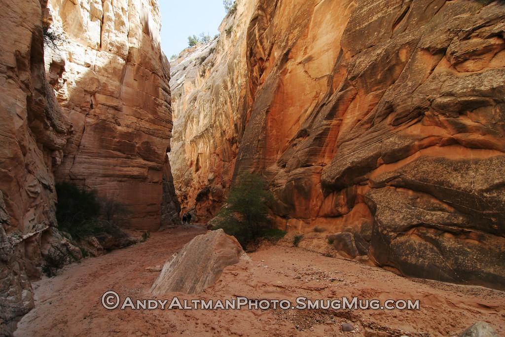 Cottonwood Canyon (1)