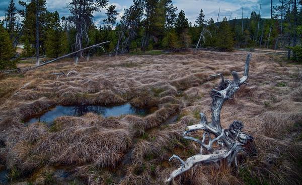 Yellowstone Bog