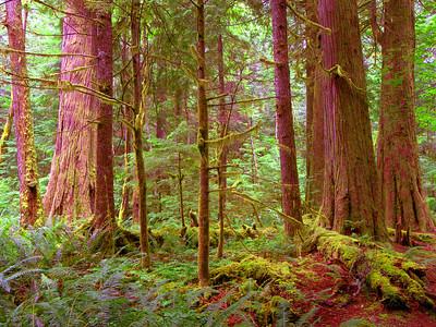 Amazing Giants, North Cascades National Park. Washington State
