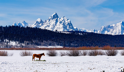 Lunch Time at Grand Teton