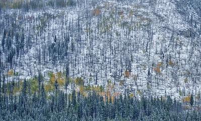 Snow on the Mountain, Kananaskis Country, AB