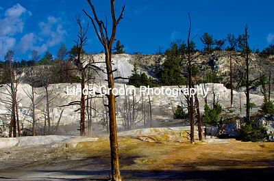 The Terraces of Mammoth Hot Springs