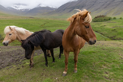 But the ubiquitous Icelandic horses seem unimpressed