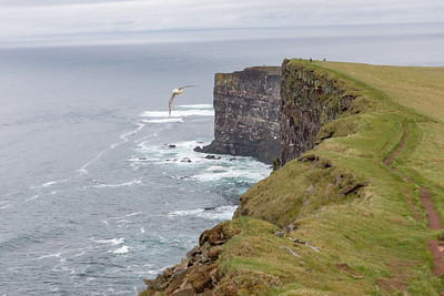 These are the cliffs  at Latrabjarg which are famous as the home to puffins and other birds