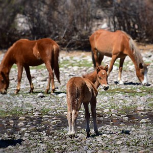 WildHorses_CapturedbyCozart_Mar1818