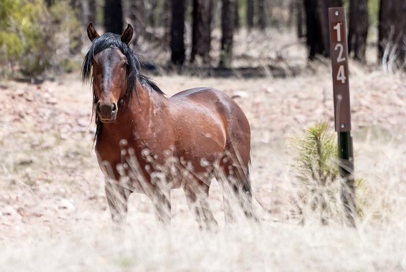Heber's Wild Horses 2013