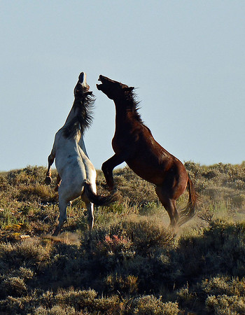 The Wild Horses of Wyoming