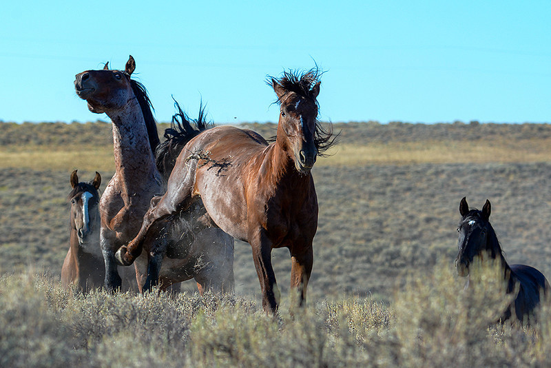 Back Off!!! - Wild Horse Tour, Green River, Wyoming - Carla Farris - August 2013