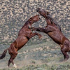 Wild Horse Tour - Green River, Wyoming - Jay Brooks - June 2014