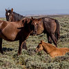 Family - Wild Horse Tour, Green River, Wyoming - Jay Brooks - June 2014