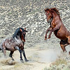 A Show of Power - Wild Horse Tour, Green River, Wyoming - Jack Denger - August 2013