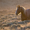 Morning Light - Wild Horse Tour - Green River, Wyoming - Jay Brooks - June 2014