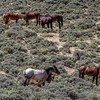 Wild Horse Tour - Green River, Wyoming - Judie Brooks - June 2014