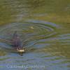 OtterAdventures-12