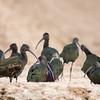 The Ibis Gathering-1